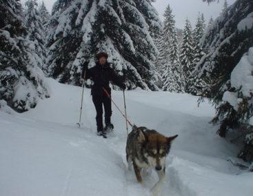 Cani-raquettes dans les montagnes du Jura